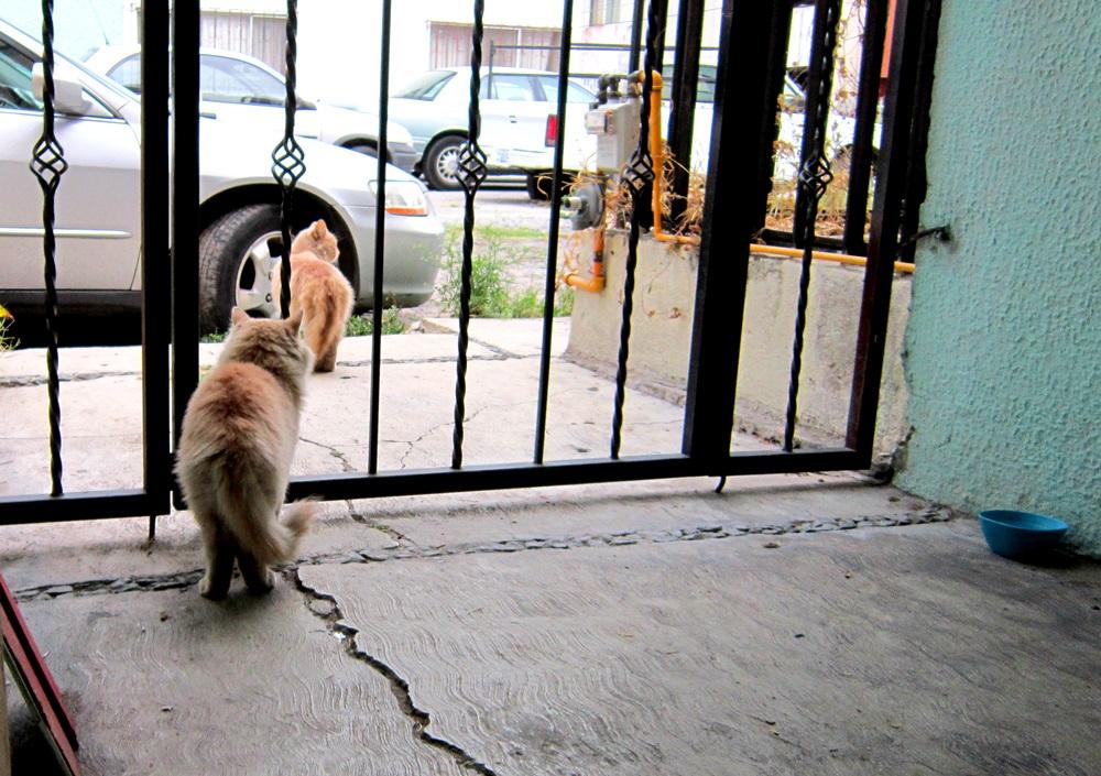 cambiar-el-mundo-gatitos2
