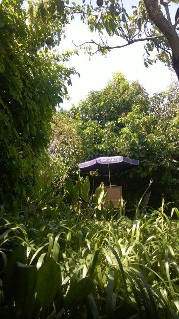 El jardín es amplio, un poco frondoso pero amplio y con un sol brillante que despierta hasta en la última semana de exámenes.